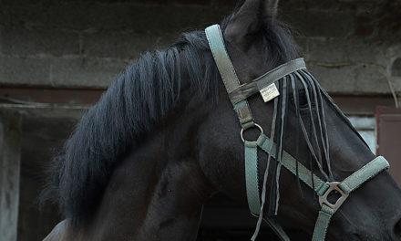 Heute auf nach Wocklum in die Welt der Pferde