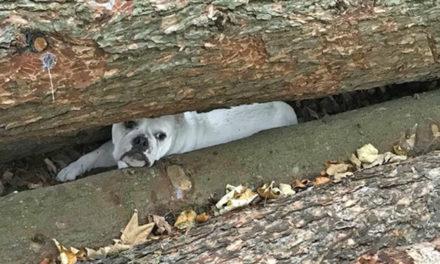 Hündin zwischen Baumstämmen gefangen