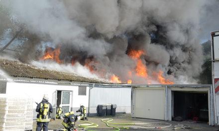 Großbrand auf Beckumer Geflügelfarm – Feuerwehr versucht Küken zu retten