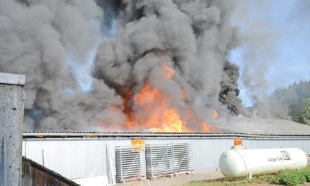 Verheerendes Feuer in Beckum: Alle 1000 Küken tot – 150.000 Euro Schaden
