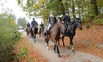Reiterverein Balve lädt ein zum Ritt durch bunte Herbstwälder