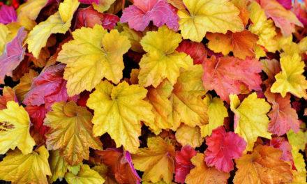 Herbstblätter-Basteln in der Bücherei Balve
