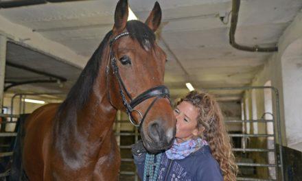 Herbstferien-Aktion: Mein erstes Pferde-Buch – Kreatives Schreiben zwischen Heu und Stroh in Wocklum
