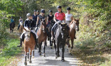 Herbstritt: Mit Pferd und Hund durch die herrlich bunten Wälder