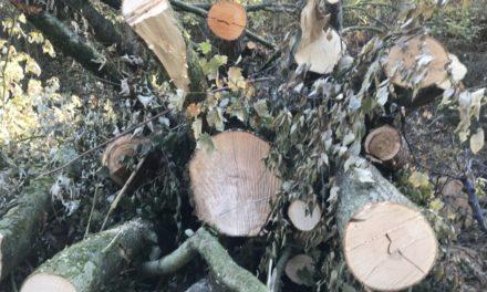 Morgen beginnt Baumfällaktion: Nur kurzzeitige halbseitige Sperrung des Hönnetals