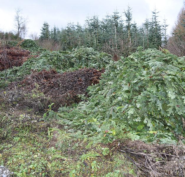 Warum reagiert Stadt Balve nicht? – Zig Tonnen Grünschnitt illegal am Bergbauwanderweg abgekippt