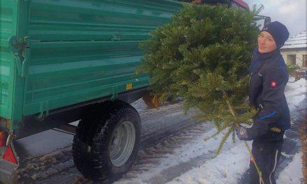 Mit Blick aufs Osterfeuer sammelt KLJB L.A. am 12. Januar Weihnachtsbäume ein