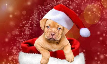 Die HÖNNE-ZEITUNG wünscht allen Lesern ein frohes Weihnachtsfest