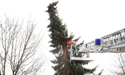 Feuerwehr Stadtmitte stutzt wackligen Nadelbaum in wenigen Minuten