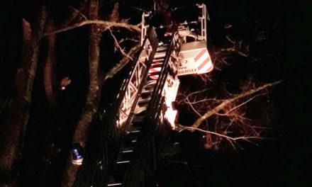 Umgestürzter Baum stoppt Krankentransport im Hönnetal – Feuerwehr heute dreimal im Einsatz