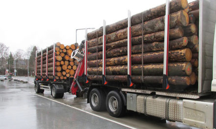 Polizei bremst Holztransporter aus – 51 Tonnen waren den Beamten zuviel