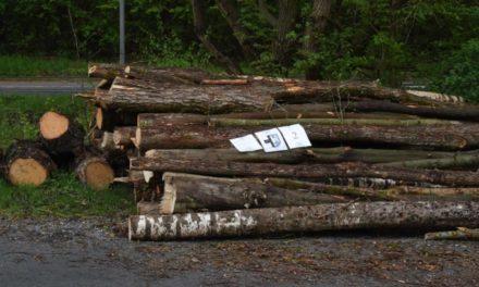Holz aus Hönneaue: Stadt Balve als Auktionator aktiv