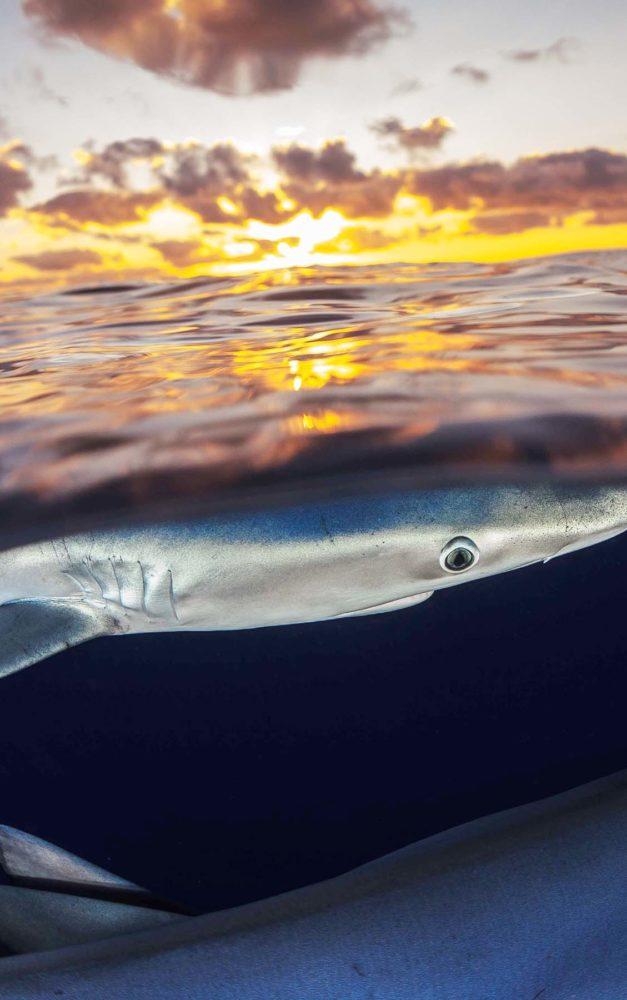 Der mit den Haien flirtet – Abenteurer zu Gast im Sauerlandpark