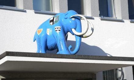 Der neue Rat der Stadt Balve auf einen Blick