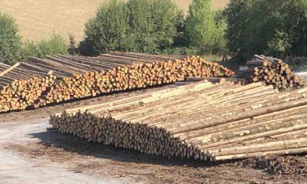 FBG Balve ist wütend auf Wald Holz Sauerland GmbH