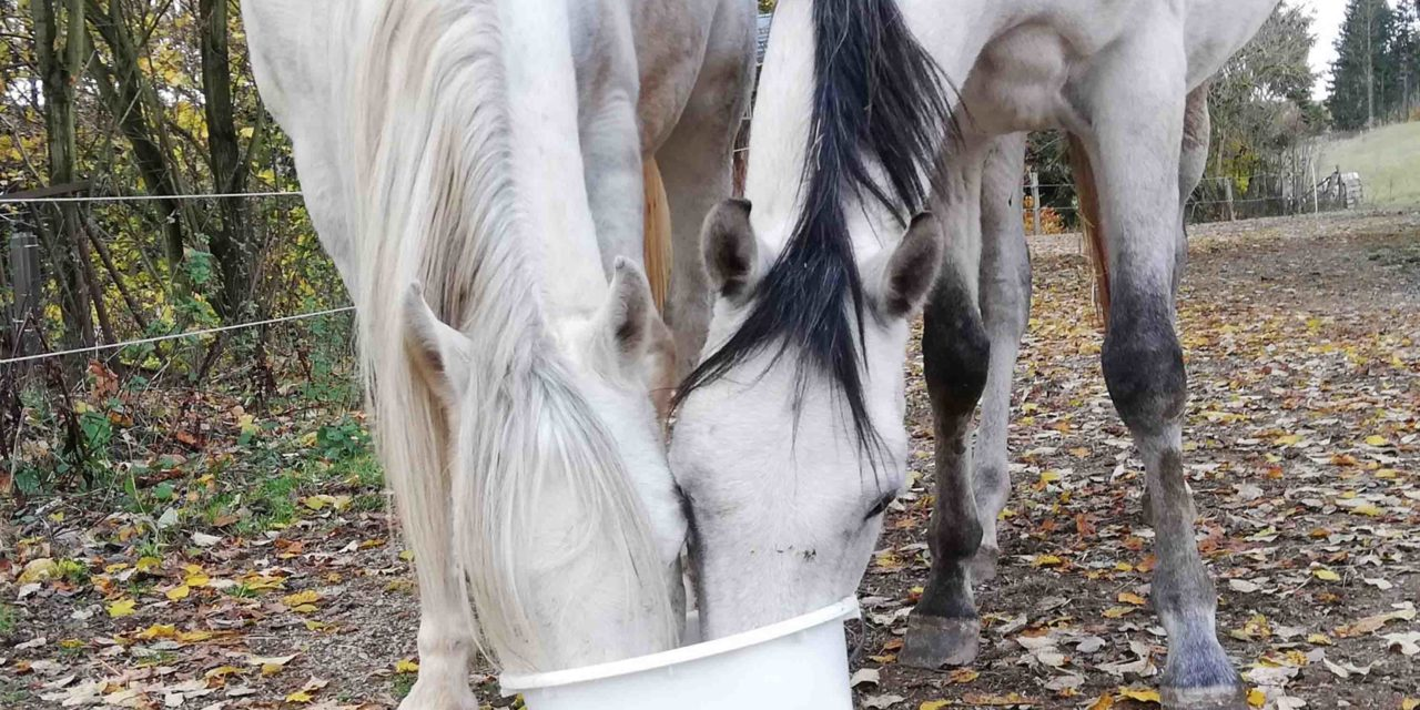 Pferdefütterung in der Praxis
