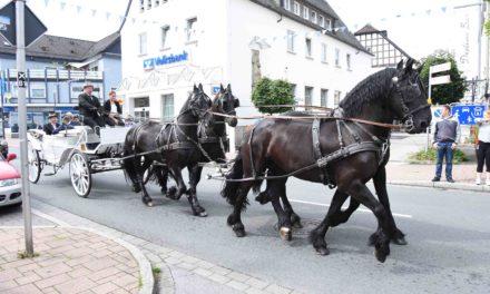 Gebisse im Pferdemaul – Varianten und Einsatzzwecke