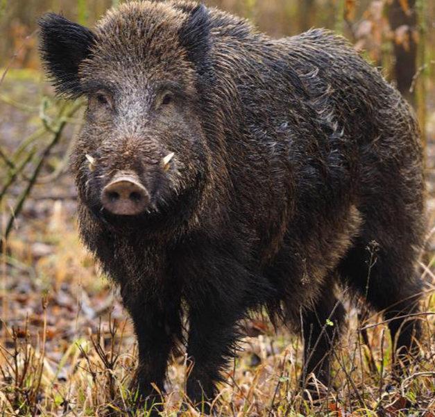 """Nur das Wildschwein kam ohne """"Knöllchen"""" davon"""