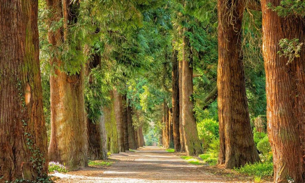 Straßen.NRW pflanzt Alleebäume entlang der B236 in Iserlohn