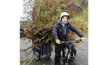 KLJB L.A. sammelt Samstag abgesungene Weihnachtsbäume ein