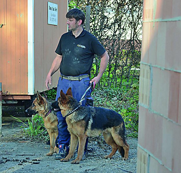 Hundebesitzer verhindert dreisten Einbruch in Mellen – Ganoven muss er laufen lassen
