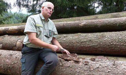 Unmengen an Käferholz beunruhigen Balver Waldbesitzer