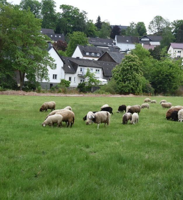 EILMELDUNG: 35 neue Wohnungen in Balve?