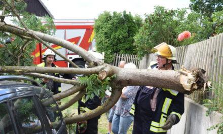 EINSATZ in L.A.: Umgestürzter Essigbaum macht Warendorfer richtig sauer