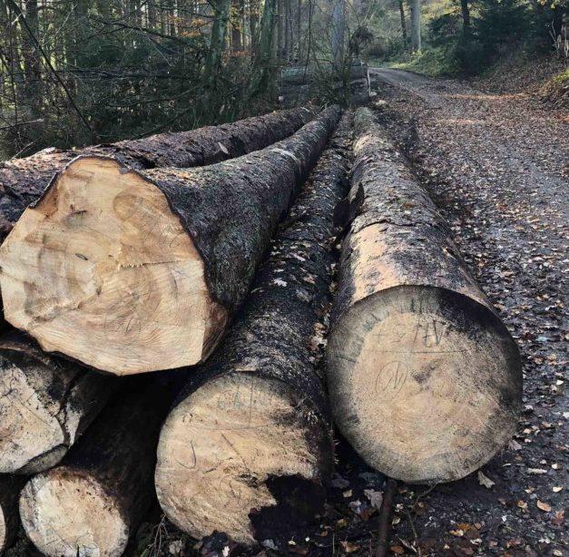 """""""SUPERGAU"""": Waldbauern sind wütend auf NRW-Landesregierung"""